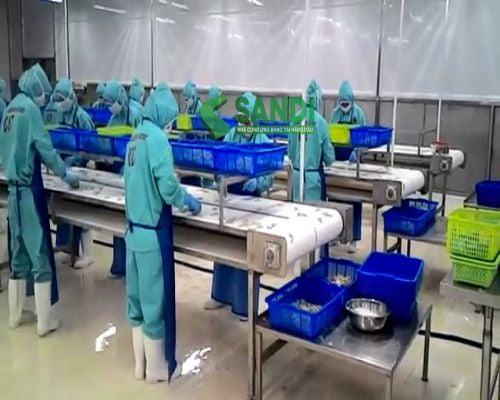 Hệ thống băng tải chế biến thủy hải sản