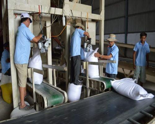 Giới thiệu về hệ thống băng tải lúa gạo