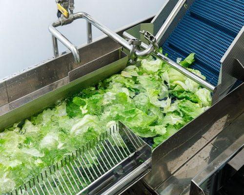 Đặc điểm của hệ thống băng chuyền rửa rau củ